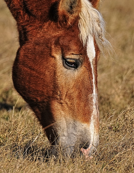 Horse Picture-66