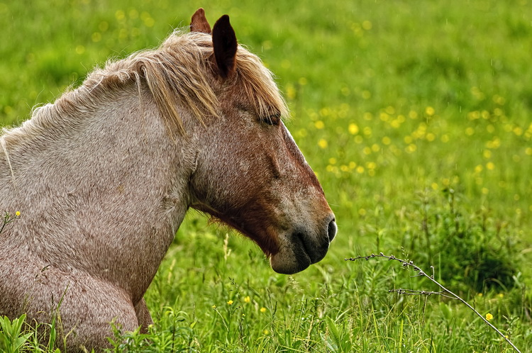 Horse Picture-69