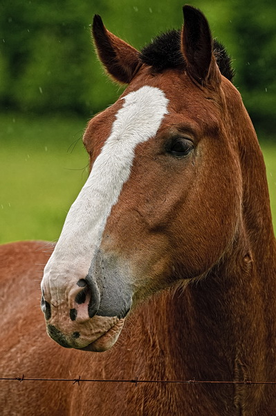 Horse Picture-72