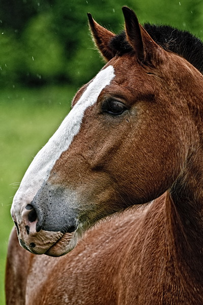 Horse Picture-73