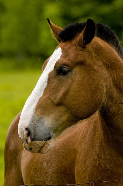 Horse Picture-74