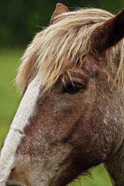 Horse Picture-75