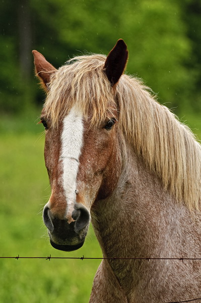 Horse Picture-76