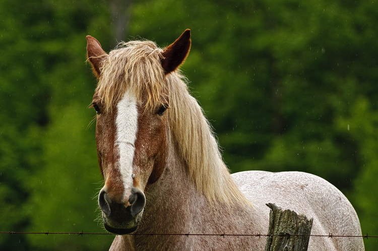 Horse Picture-77