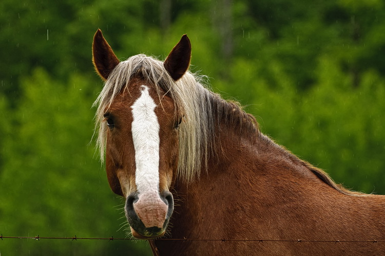 Horse Picture-78