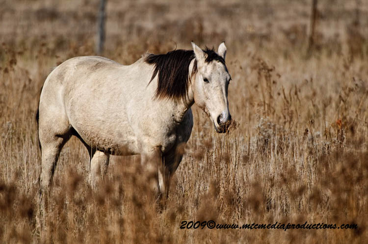 Horse Picture-92