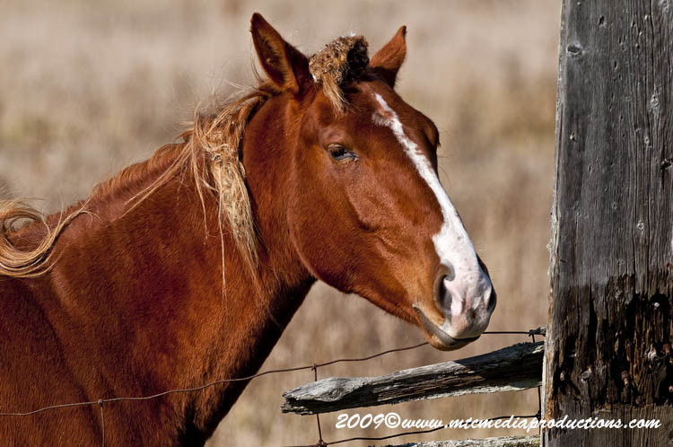 Horse Picture-95