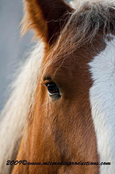 Horse Picture-97