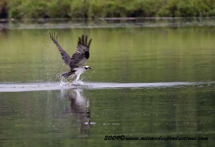 Osprey Picture-35
