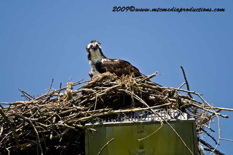 Osprey Picture-43