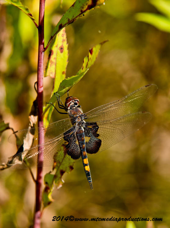 Black Saddlebags Picture